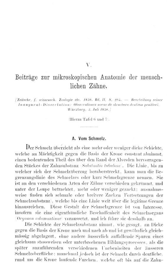 Czermak, Johann N. - Beiträge zur mikroskopischen Anatomie der ...